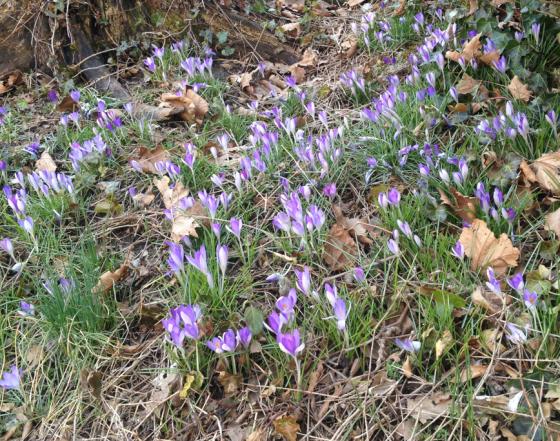 Våren...